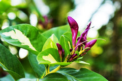 Beau fond pourpre de vert de fleur Images stock