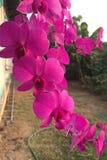 Beau fond rose d'orchidée? produit en picoseconde Images libres de droits