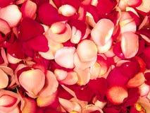 Beau fond rouge de pétale de roses Images stock