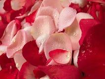 Beau fond rouge de pétale de roses Photo libre de droits
