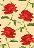Beau fond sans couture avec des roses de tige et de feuilles illustration stock