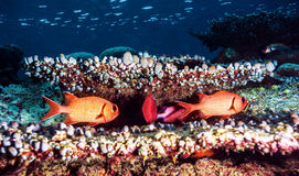 Beau fond sous-marin Photos libres de droits