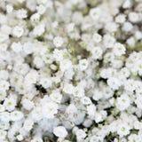 Beau fond tendre de fleurs blanches Photos libres de droits