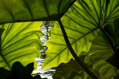 Beau fond tropical de feuilles Photo stock