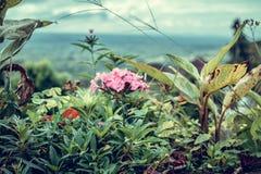 Beau fond tropical de fleur sur l'île de Bali, Indonésie Fermez-vous vers le haut des fleurs Photo stock