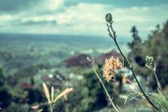 Beau fond tropical de fleur sur l'île de Bali, Indonésie Fermez-vous vers le haut des fleurs Image stock