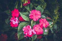 Beau fond tropical de fleur sur l'île de Bali, Indonésie Fermez-vous vers le haut des fleurs Photographie stock
