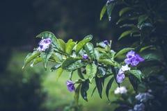 Beau fond tropical de fleur sur l'île de Bali, Indonésie Fermez-vous vers le haut des fleurs Photos stock