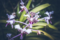 Beau fond tropical de fleur sur l'île de Bali, Indonésie Fermez-vous vers le haut des fleurs Photographie stock libre de droits