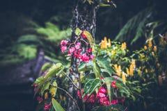 Beau fond tropical de fleur sur l'île de Bali, Indonésie Fermez-vous vers le haut des fleurs Images stock