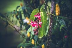 Beau fond tropical de fleur sur l'île de Bali, Indonésie Fermez-vous vers le haut des fleurs Photos libres de droits