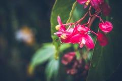 Beau fond tropical de fleur sur l'île de Bali, Indonésie Fermez-vous vers le haut des fleurs Images libres de droits