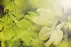 Beau fond vert clair floral Fleurs vertes en gros plan à la lumière du soleil Orientation molle Image libre de droits