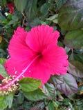 Beau fond vert de fleur rouge des feuilles image libre de droits