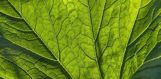Beau fond vert naturel Image libre de droits