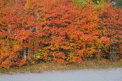Beau fond vibrant d'arbres de feuillage de couleur d'automne photographie stock libre de droits