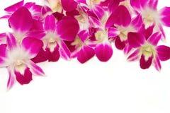 Beau fond violet d'orchidée Photo stock