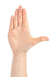 Beau geste femelle d'attention de main D'isolement sur le fond blanc photos libres de droits