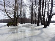 Beau gisement d'inondation d'arbres au printemps, Lithuanie Photo stock