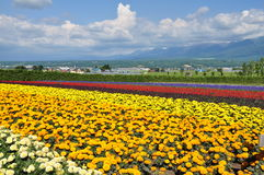 Beau gisement de fleur d'arc-en-ciel sur la colline Photos stock
