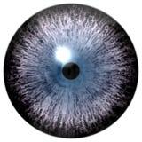 Beau globe oculaire animal, fond blanc d'isolement illustration de vecteur