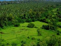 Beau greenscape-I de Ratnagiri Image libre de droits