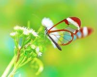Beau guindineau sur la fleur Photographie stock