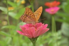 Beau guindineau sur une fleur images libres de droits