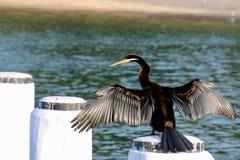 Beau héron sur la mer Photographie stock libre de droits