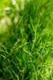 Beau hellosummer d'herbe verte d'été Photo libre de droits