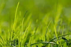 Beau hellosummer d'herbe verte d'été Images stock