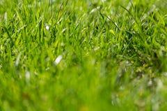 Beau hellosummer d'herbe verte d'été Photos stock