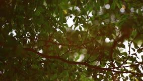 Beau hors du coucher du soleil de foyer Thorugh d'éclat de Sun où le soufflement sur l'arbre de vent laisse clips vidéos