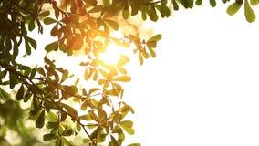 Beau hors du coucher du soleil de foyer Thorugh d'éclat de Sun où le soufflement sur l'arbre de vent laisse banque de vidéos