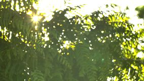 Beau hors du coucher du soleil de foyer Éclat de Sun complet le soufflement sur des feuilles d'arbre de vent clips vidéos