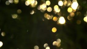 Beau hors du coucher du soleil de foyer ?clat de Sun complet le soufflement sur des feuilles d'arbre de vent banque de vidéos