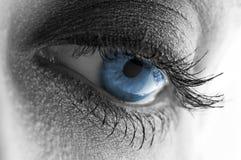 Beau œil bleu Image stock
