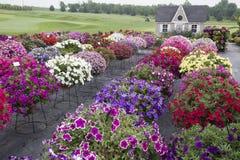 Beau jardin avec la profusion des fleurs Image stock