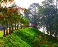 Beau jardin avec les arbres verts luxuriants images stock