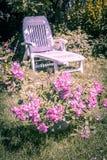 Beau jardin d'été avec des roses roses de floraison et une chaise longue blanche Image libre de droits