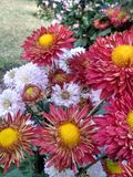 Beau jardin d'agrément dans le ludhiana Image stock