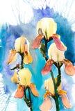 Beau jardin d'iris Photo stock