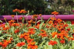 Beau jardin de fleur Photos libres de droits