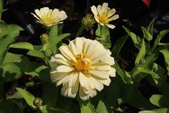 Beau jardin de fleur Photo stock