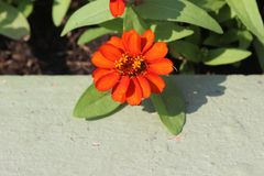 Beau jardin de fleur Photographie stock libre de droits