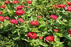 Beau jardin de fleur Image stock