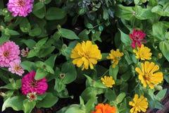 Beau jardin de fleur Photo libre de droits