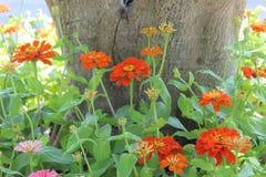 Beau jardin de fleur Photographie stock