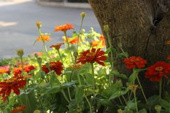 Beau jardin de fleur Images libres de droits