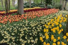 Beau jardin de forêt avec les tulipes colorées photographie stock
